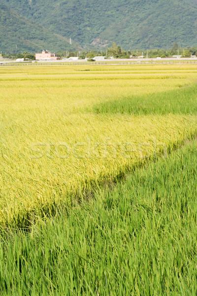Idyllic rural scenery Stock photo © elwynn