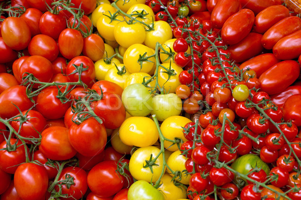 Different kinds of tomatoes Stock photo © elxeneize