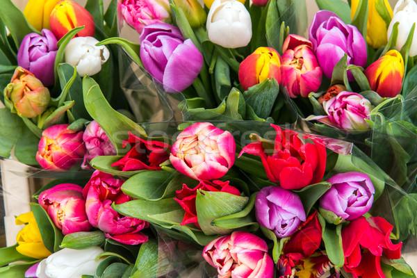 Colorido tulipas mercado venda flor casamento Foto stock © elxeneize