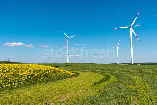 Alanları kırsal Almanya çiçekler doğa çiftlik Stok fotoğraf © elxeneize