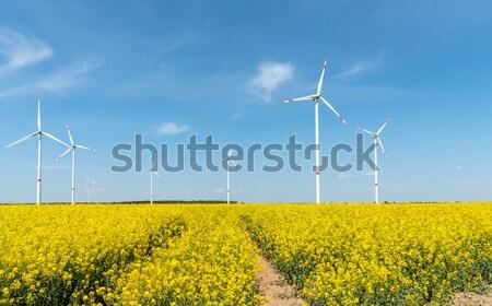 Windwheels and yellow rapeseed Stock photo © elxeneize