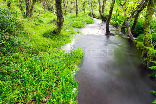 Small river in a green forest Stock photo © elxeneize