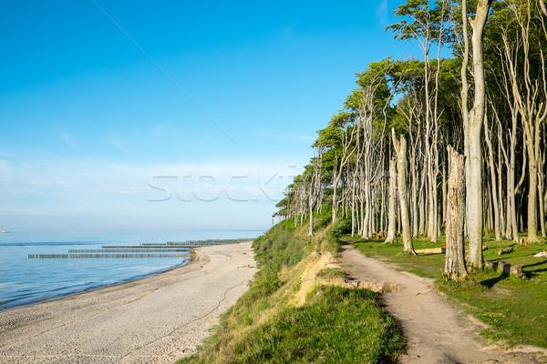 árvore floresta mar báltico céu natureza paisagem Foto stock © elxeneize