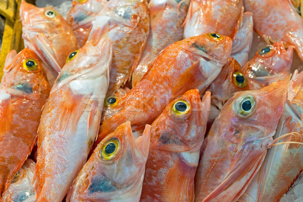 Red mullet fish for sale Stock photo © elxeneize