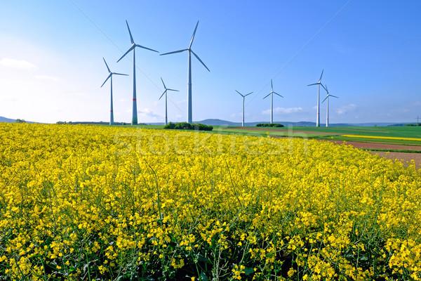 Windwheels and rapeseed Stock photo © elxeneize