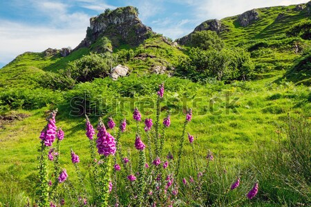 Fairy glen on the Isle of Skye Stock photo © elxeneize