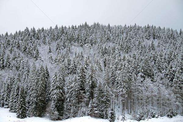 Iarnă peisaj negru pădure Germania cer Imagine de stoc © elxeneize