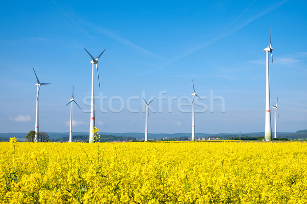Yellow rapeseed field and windwheels Stock photo © elxeneize