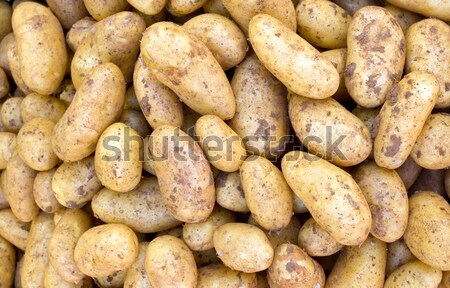 Potatoe background  Stock photo © elxeneize