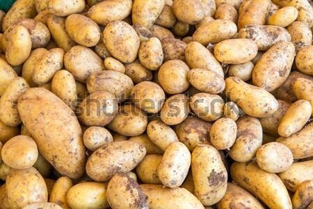 Taze patates pazar satış bahçe mutfak Stok fotoğraf © elxeneize
