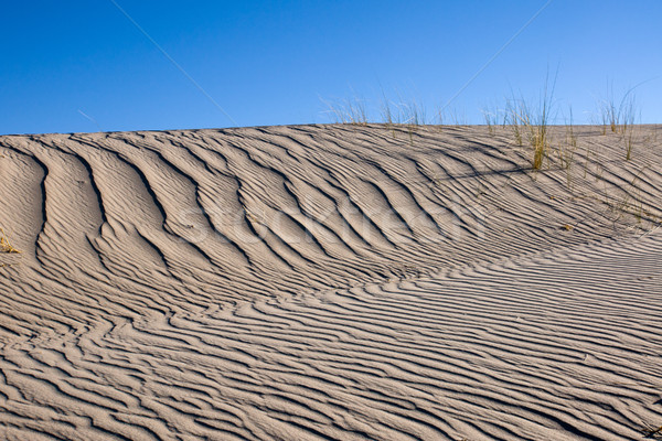 Duin gras blauwe hemel Stockfoto © elxeneize