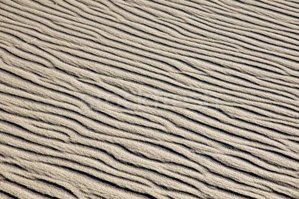 砂丘 表面 海 背景 夏 海 ストックフォト © elxeneize