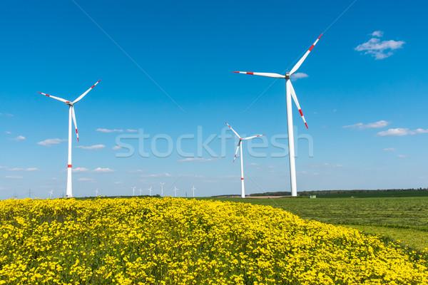 Windwheels and yellow flowers Stock photo © elxeneize
