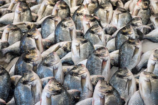 Fresh dorado fish Stock photo © elxeneize