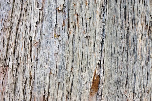 сосна Кора дерево старые стены природы Сток-фото © elxeneize