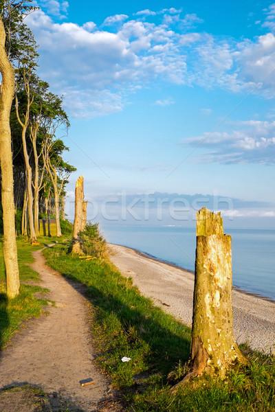 Erdő Balti-tenger alkonyat természet tájkép tenger Stock fotó © elxeneize