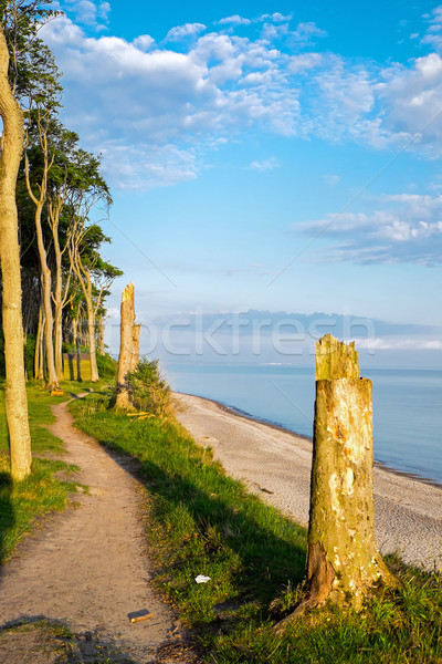 Floresta mar báltico crepúsculo natureza paisagem mar Foto stock © elxeneize