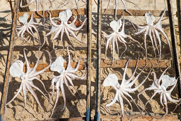 Polpo Portogallo spiaggia alimentare pesce mare Foto d'archivio © elxeneize