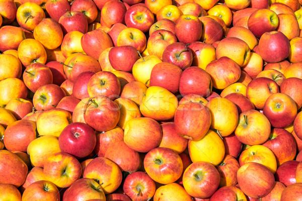 красный желтый яблоки продажи рынке яблоко Сток-фото © elxeneize