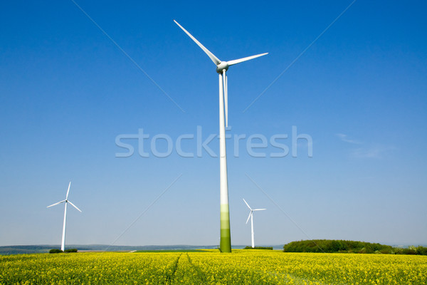 Rapeseed field and windwheels Stock photo © elxeneize