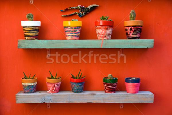 Shelf full of cacti Stock photo © elxeneize