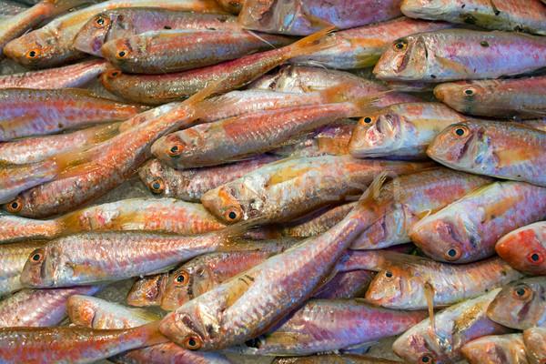 Fresh red mullet  Stock photo © elxeneize