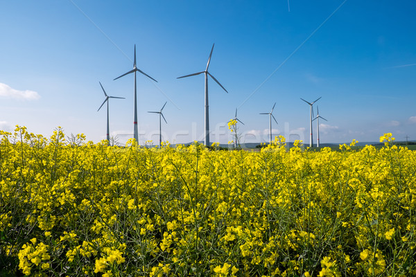 Rapeseed with wind engines  Stock photo © elxeneize