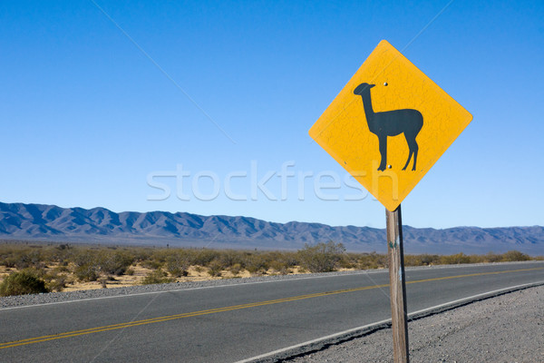 Lama Sign in the andes Stock photo © elxeneize