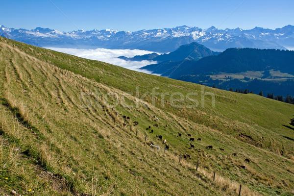 Landscape in the swiss alps Stock photo © elxeneize