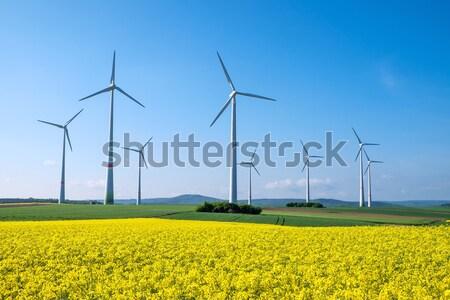 Rapeseed and windwheels Stock photo © elxeneize