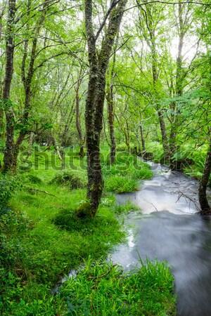 小 小川 緑 森林 高地 スコットランド ストックフォト © elxeneize