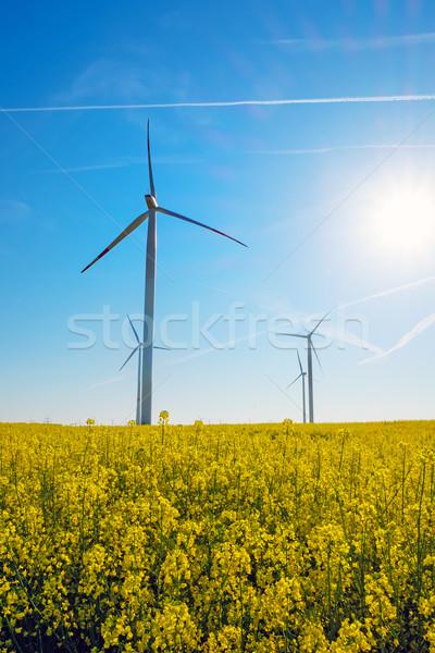 Sunshine, rapeseed and windwheels Stock photo © elxeneize