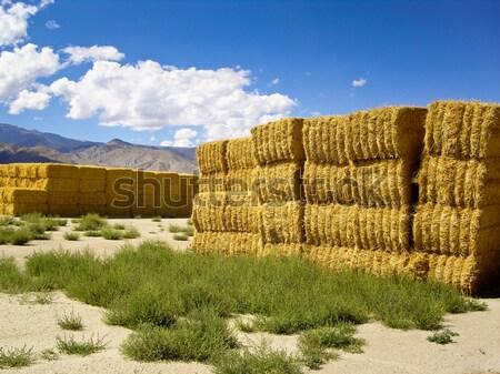 Foto stock: Dourado · feno · luz · solar · Califórnia · EUA · nuvens