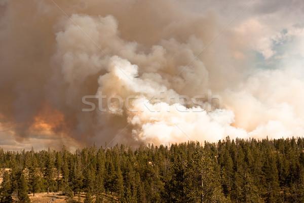 Raging forest fire Stock photo © emattil