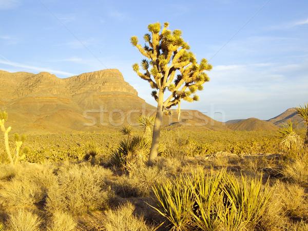 Ostatni promienie ciepły słońce drzew wieczór Zdjęcia stock © emattil