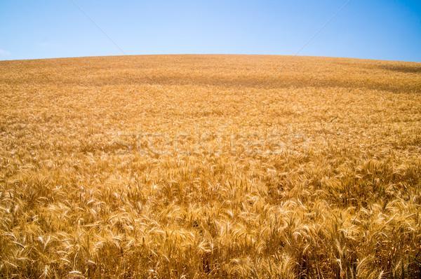 カリフォルニア 波 そよ風 自然 色 ストックフォト © emattil