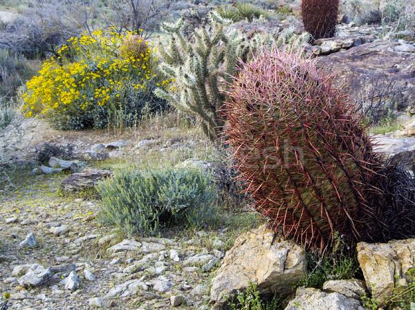 Nevada çöl yeşil kum kaya renk Stok fotoğraf © emattil