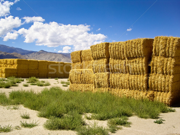 Hoog woestijn Californië USA wolken groene Stockfoto © emattil
