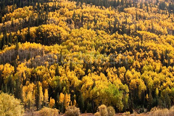Domboldal ősz szín Colorado tele égbolt Stock fotó © emattil