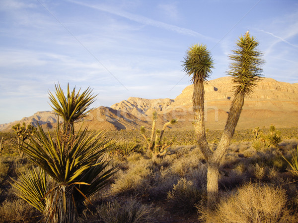 Késő fény sivatag növényvilág izzik zöld Stock fotó © emattil