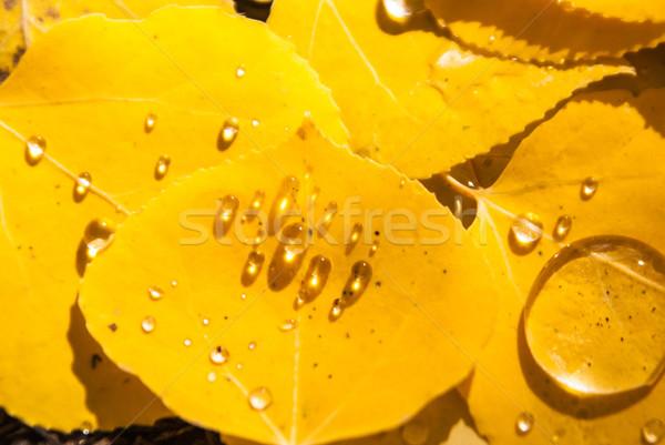 Pluie laisse Colorado eau nature Photo stock © emattil