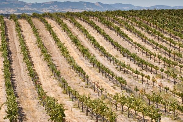 California winnicy wina kraju USA Zdjęcia stock © emattil