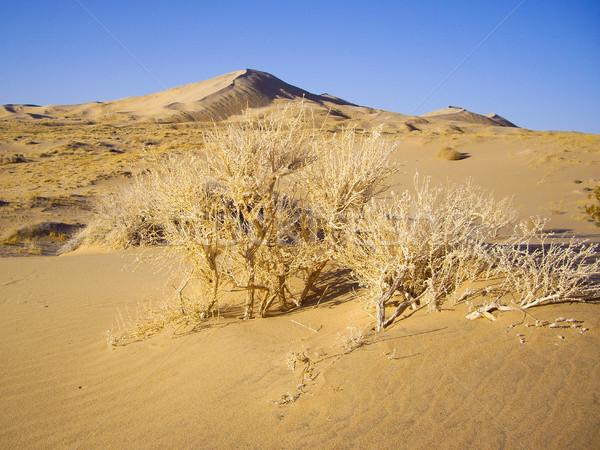 Sécher désert flore générique usine Bush Photo stock © emattil