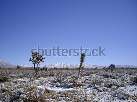 Woestijn sneeuw landschap groene winter plant Stockfoto © emattil