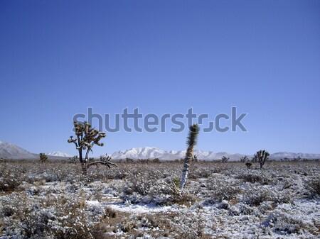 çöl kar manzara yeşil kış bitki Stok fotoğraf © emattil