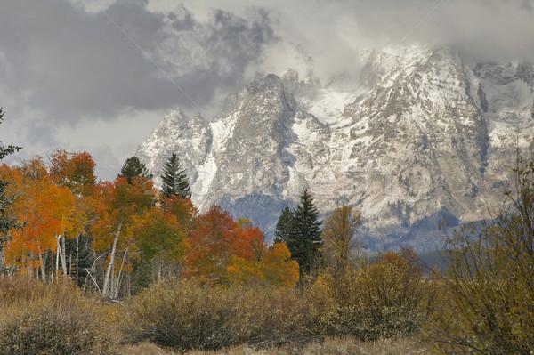 Snowy Mountain Vista Stock photo © emattil