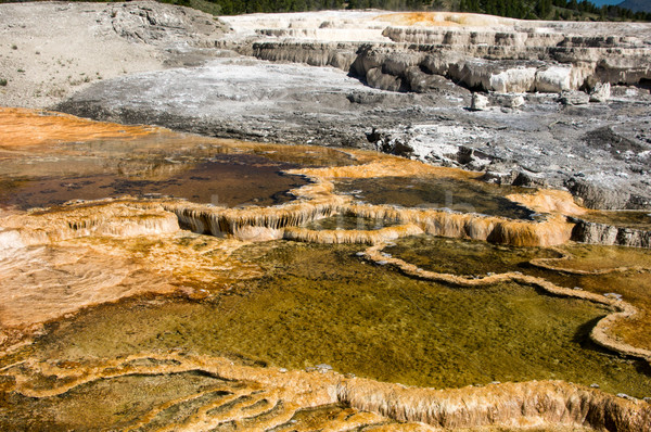 Colorful thermal pools in Yellowstone Stock photo © emattil