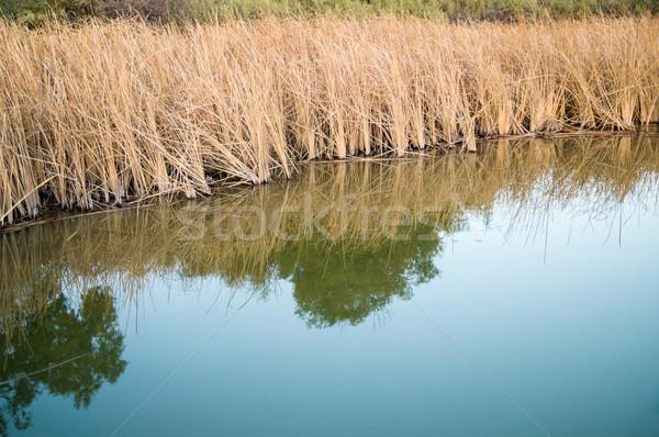 Колорадо берег реки ярко реке край облака Сток-фото © emattil