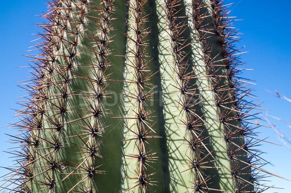 Spiky Saguaro Stock photo © emattil