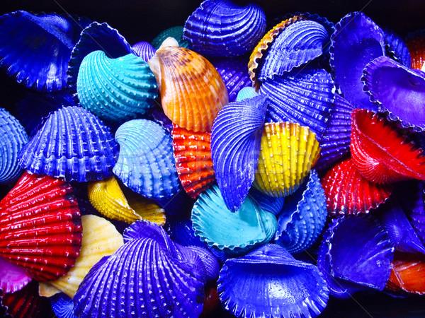 Bold Color Shells Stock photo © emattil